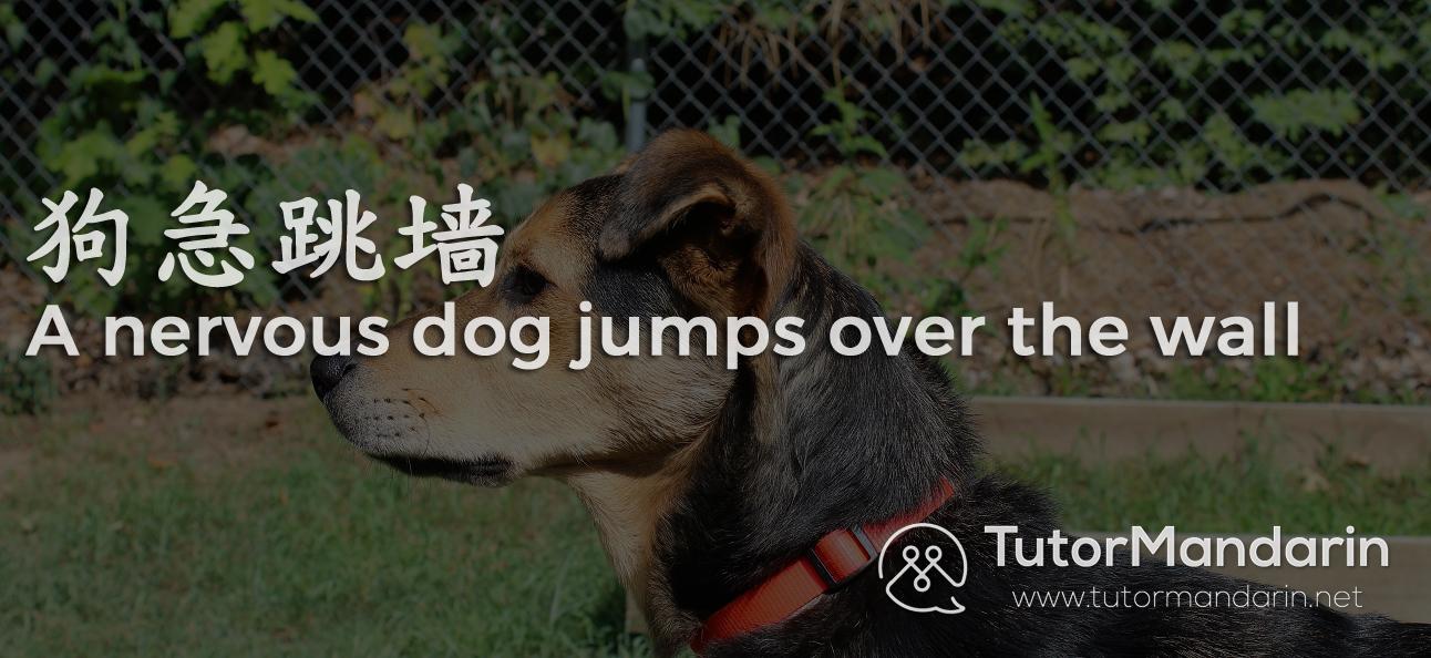 Chinese Chengyu dog wall