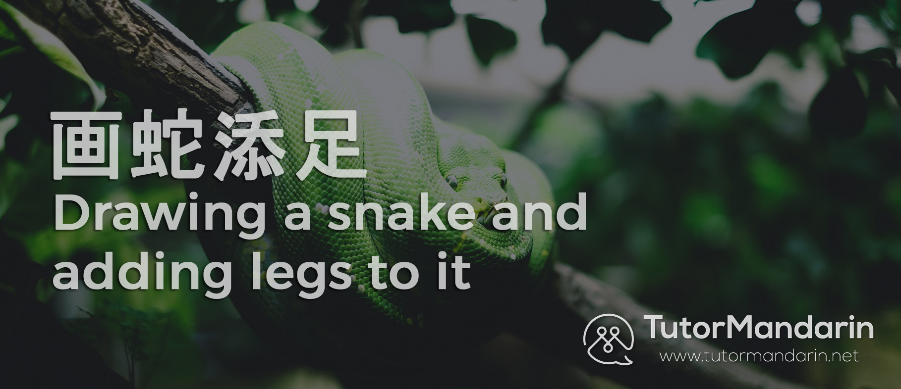 learn chinese chengyu